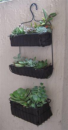 plants 757920