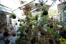 string gardens 4