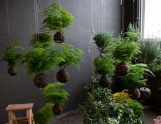 string gardens 5