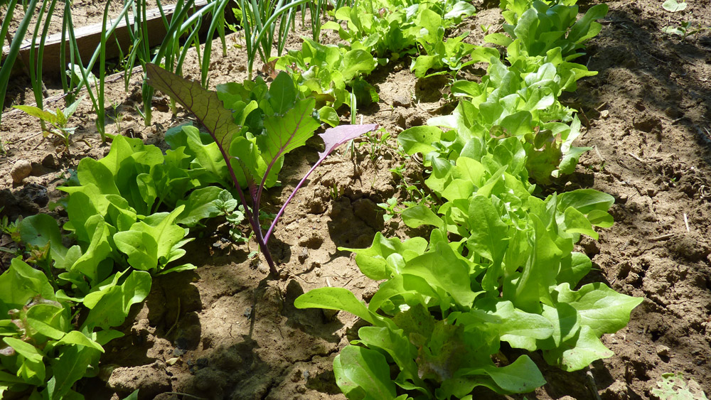 Krátky fotografický prehľad toho, čo pestujeme
