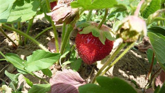 Ďalší report o zelenine a ovocí