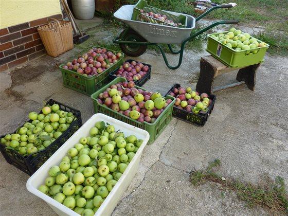 Jablková oberačka
