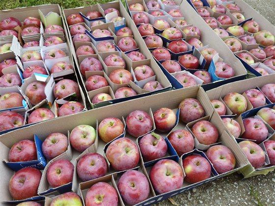 Skladovanie jabĺk na zimu v krabiciach