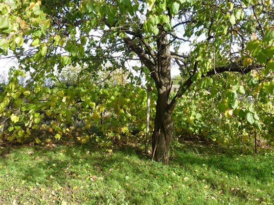vinic na jesen