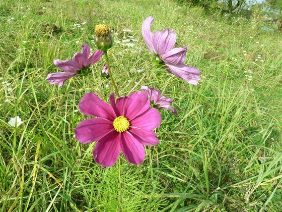 fialovy kvet